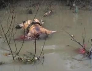 dead-bodies-in-river