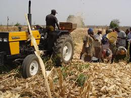 World Bank Approves $300 Million for Nigerian Farmers
