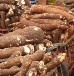 NEPAD Advocates Increased Development in Cassava