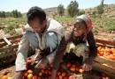 Ethiopian Agricultural Transformation