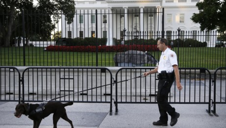 Man tries to climb White House attacked by dogs