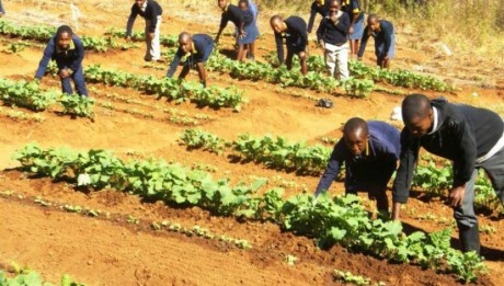 Agriculture Ministry Aims 20,000 Cooperatives By End Of Year