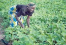 When girls association mobilised youths to adopt agriculture