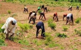 Netherlands Reveals Plan to Improve Nigeria's Agriculture Sector