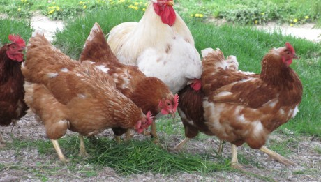 Two Men Over Sentenced To Death For Robbing Fowls In Osun