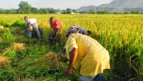 FG's new rice policy boosts hope for strong business activities at port