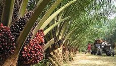 Nigerian diaspora queen promotes oil palm planting