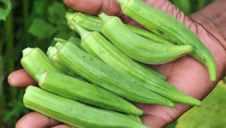Benefits of Okro