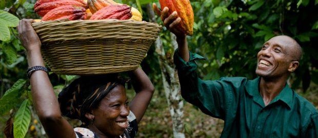 Governor Mimiko To Distribute Free Multi-Million Naira Agric Input To Ondo Farmers