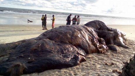 Dead Whale Found On Nigerian Beach