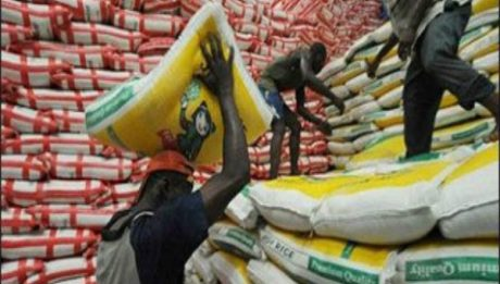 Nigeria To Start Exporting Rice