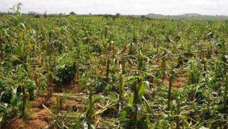 Nigeria invites Russian farmers to invest