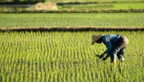 World Bank Approves $200 Million Loan To Boost Agriculture In Nigeria