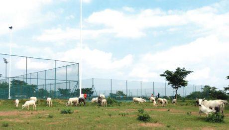 Herdsmen convert Abuja stadium into grazing field