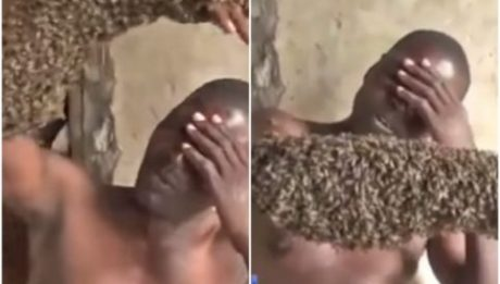 man's hand covered with live bees in Uganda