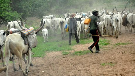 fulani herdsmen saga