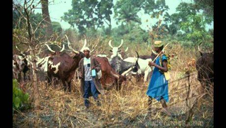Herdsmen Farmer Clash