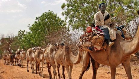 INEC to hire donkeys, bicycles in Gombe State on 2019 Elections