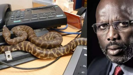 Breaking: Snakes chase Liberian President 'George Weah' away from his office