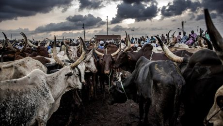 Herdsmen Invade Ogun Village, Attack Village Head