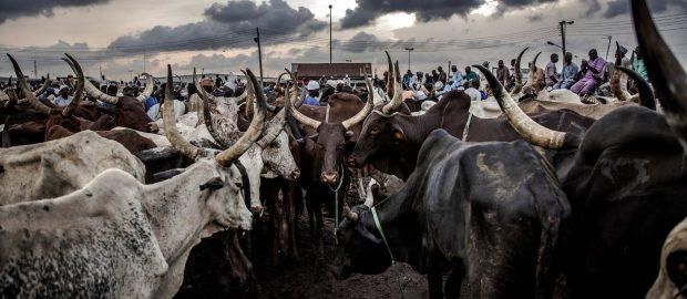 Herdsmen Invade Ogun Village, Attack Village Head