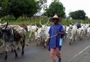 Eviction Of Bororo Fulani Herdsmen