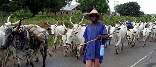 Eviction Of Bororo Fulani Herdsmen