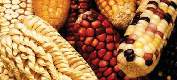 Nigerian agricultural seed agency unveils five-year plan