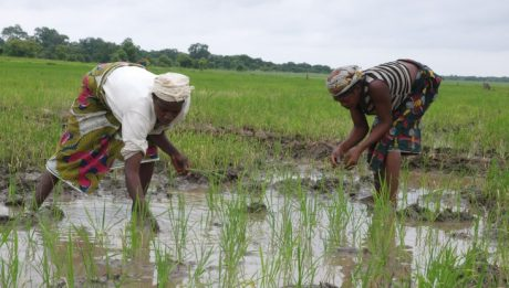 Nigerian banks give only 4% of their loans to agriculture