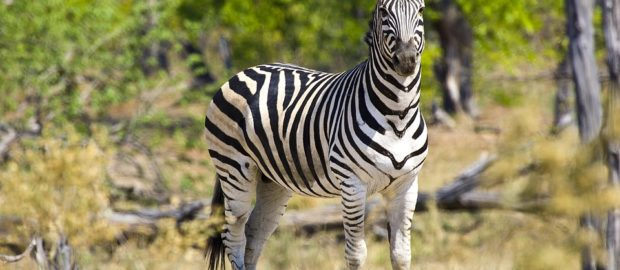 Africa's endangered wildlife at risk