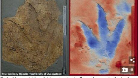 160-Million-Year-Old Dinosaur Footprints