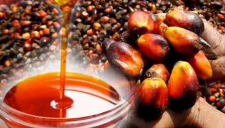 Nigeria Spends $500m Annually Importing Palm Oil