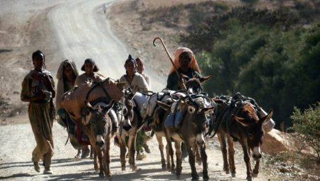 Over 100 killed in clashes in Ethiopia's Afar, Somali regions