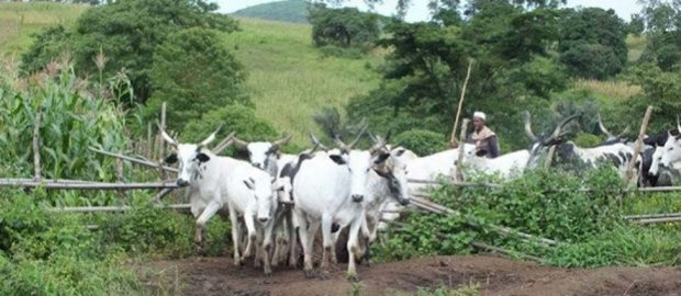 'Food production to increase with ban on open grazing'