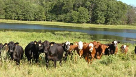 Grazing route gazette not solution to conflict