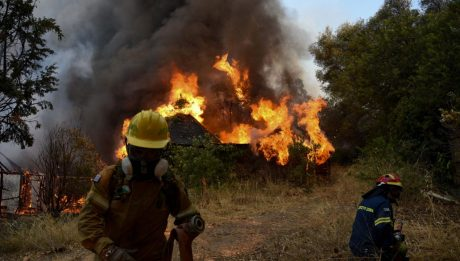 Greece forest fires gut homes, farms