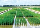 NEMA Distributes Inputs To 32,557 Flood Affected Niger State Farmers