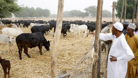 Nigeria's Economy Booming Because People Went Back To Farm