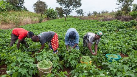 Farming Has Become Too Dangerous In Nigeria